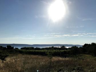 Weingarten mit Meerblick auf Pašman